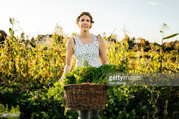 urban farmer carrying basket of freshly harvested carrots - agricultural occupation stock pictures, royalty-free photos & images