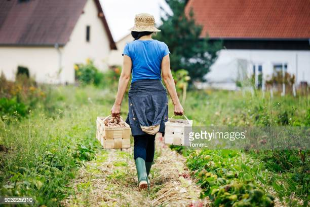 Urban Farmer Carrying Crates Of Potatoes
