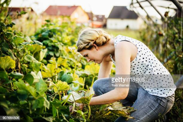 urban farmer delicately taking care of her crops - gemüsegarten stock-fotos und bilder