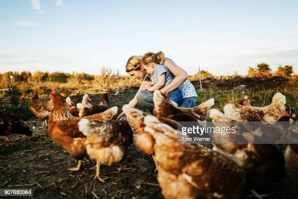 Urban Farmer Kneeling Down WIth Daughter Feeding Chickens