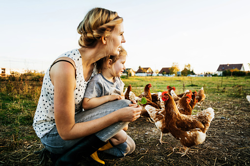 Urban Farmer Kneeling Down With Daughter Watching Chickens Together - gettyimageskorea