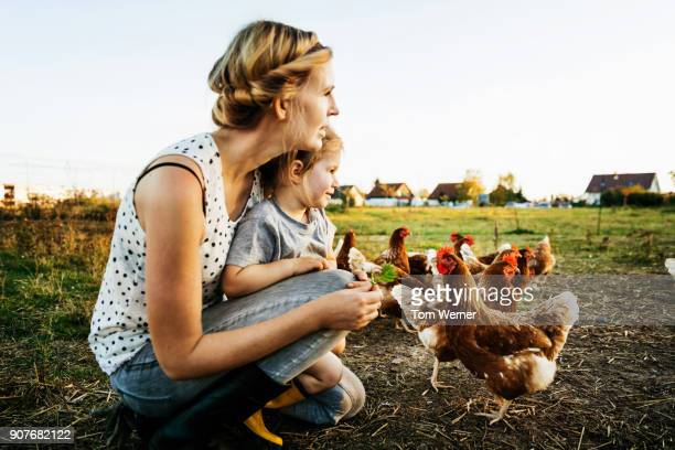 urban farmer kneeling down with daughter watching chickens together - unabhängigkeit stock-fotos und bilder