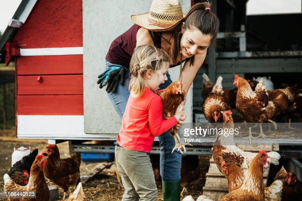 都会の農家は娘のファームチキンを示しています - 鶏小屋 ストックフォトと画像