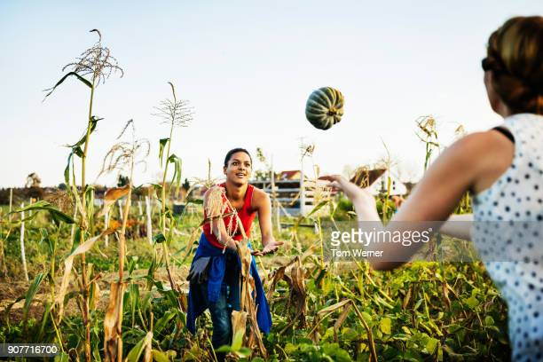 Urban Farmer Tossing Harvested Pumpkin To Colleague