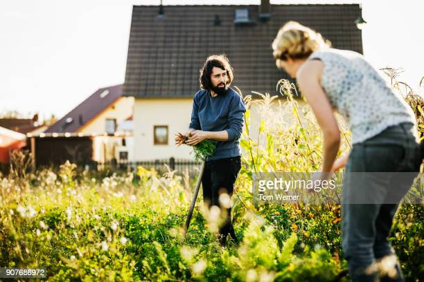 urban farmers harvesting small carrot plot by hand - farmhouse stock pictures, royalty-free photos & images