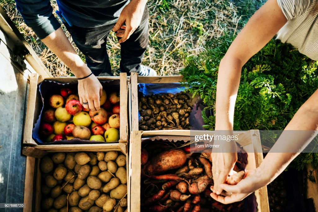 Urban Farmers Organising Crates Of Fruits And Vegetables On Truck : Stock-Foto