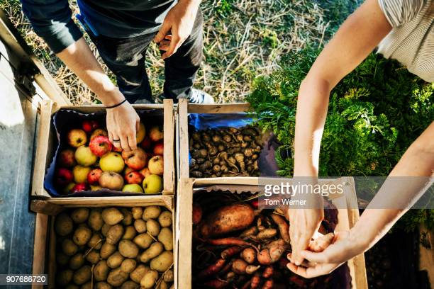 urban farmers organising crates of fruits and vegetables on truck - apple fruit stock photos and pictures