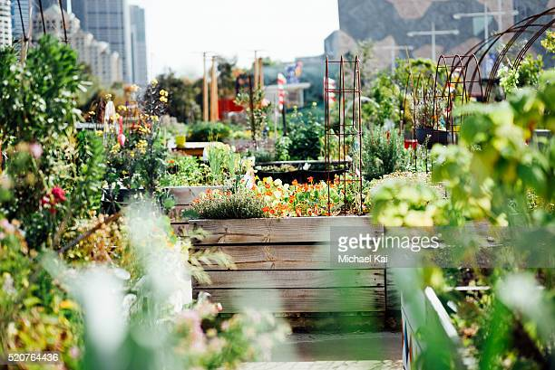 Urban garden pop up patch in city