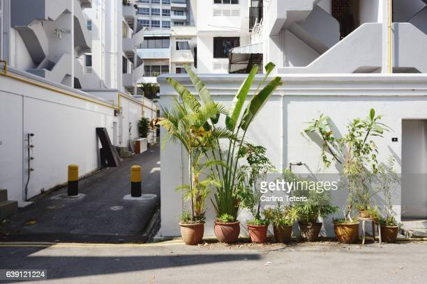 urban gardening behind an apartment of tiong bahru's heritage estate - 東南アジア ストックフォトと画像