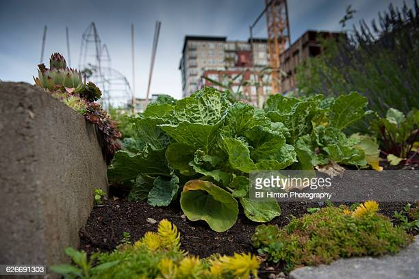 urban gardening from a personal perspective - bill hinton stock pictures, royalty-free photos & images