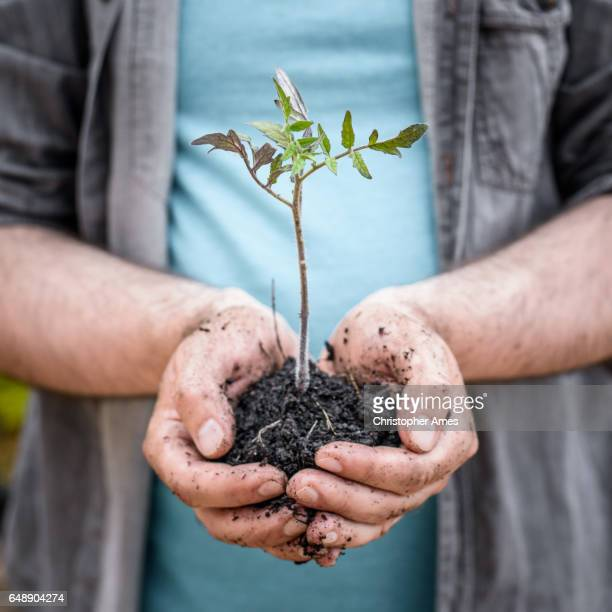 Urban Gardening - Hands Holding Small Plant in Earth