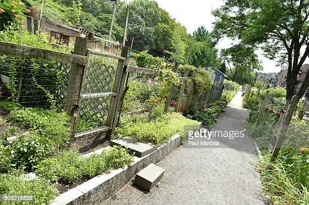 Urban gardening in Boston
