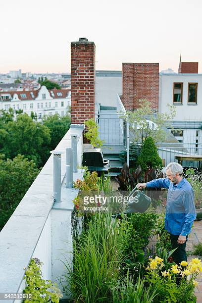 urban gardening: man pours his plants on roof garden - urban garden stock pictures, royalty-free photos & images