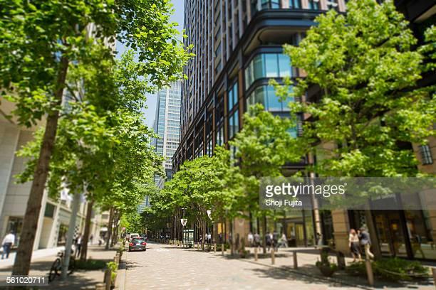 urban green - 道 ストックフォトと画像