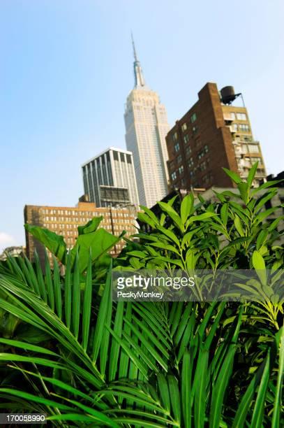 Urban Jungle Palm Plants City Skyline Background
