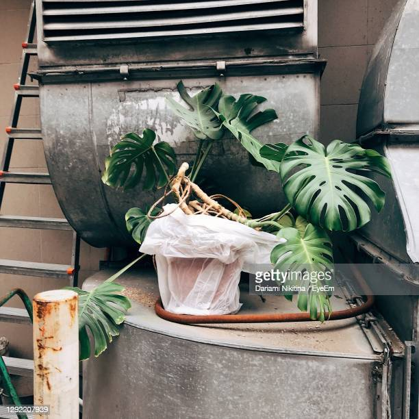 urban jungle potted plant and metal items - nikitina stock pictures, royalty-free photos & images