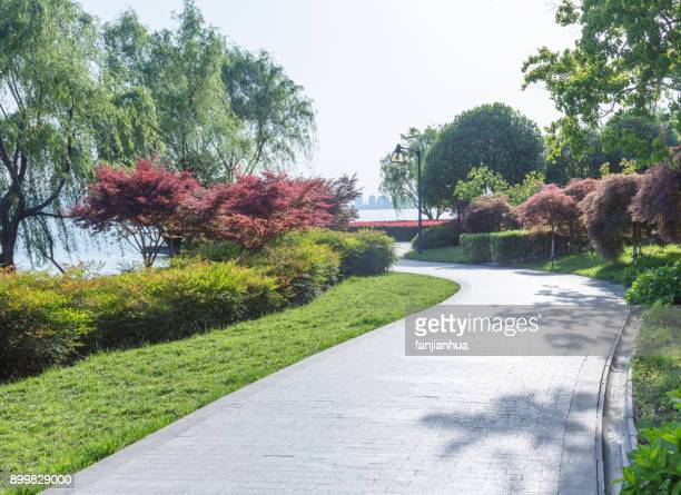 urban park scenery with curved path - paving stone stock pictures, royalty-free photos & images