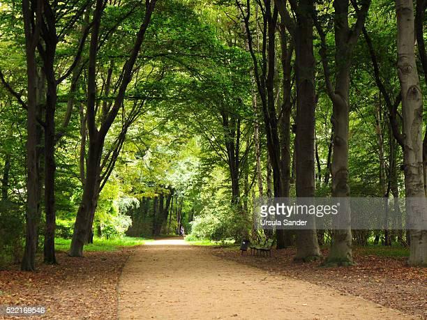 Urban park 'Tiergarten' in summer, Berlin, Germany