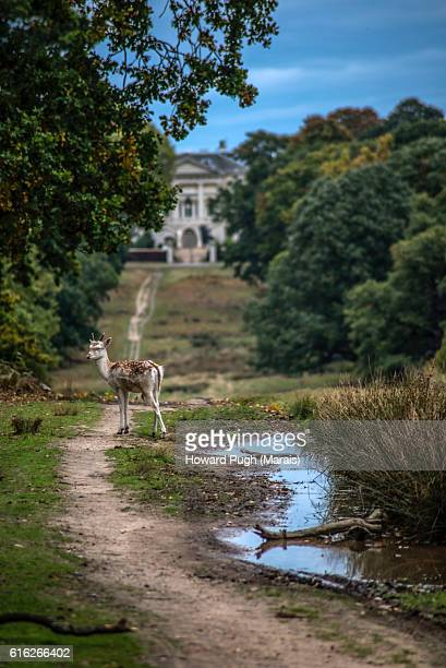 urban, rural and country landscapes of richmond park, london, uk - richmond upon thames stock pictures, royalty-free photos & images