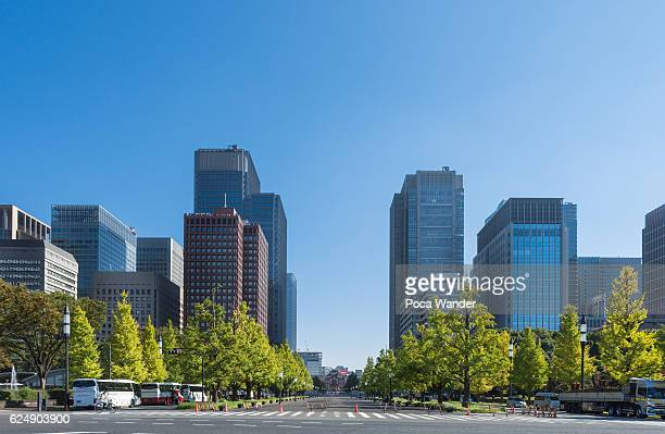 urban street of tokyo - japanese tree stock photos and pictures