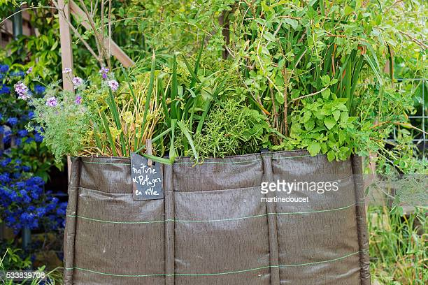 """urban vegetable garden spot, espace darwin bordeaux, france. - """"martine doucet"""" or martinedoucet stock pictures, royalty-free photos & images"""