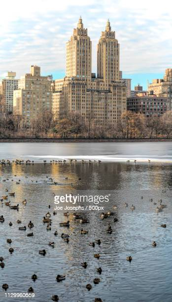 urban winter - central park reservoir stock pictures, royalty-free photos & images