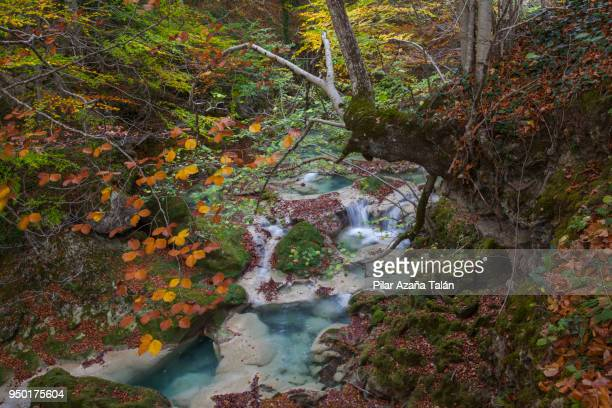 urederra river - comunidad foral de navarra fotografías e imágenes de stock