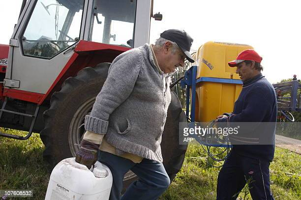 Uruguayan presidential candidate for the ruling Frente Amplio party former guerrilla Jose Mujica gets ready to work in his farm after voting in...