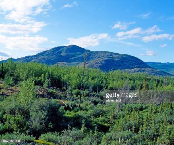 Urwuechsige Waldlandschaft mit Laub und Nadelbaeumen im subarktischen Norden die einst vom Eisvorstoss gerundeten Hoehenzuege ohne nennenswerten...