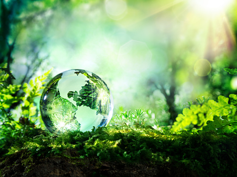 Usa globe resting in a forest - environment concept 473454180