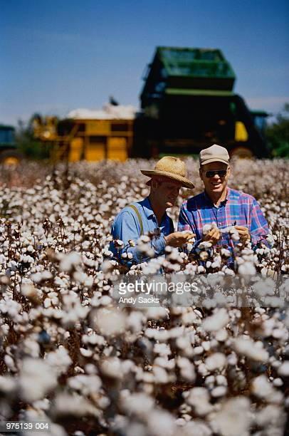 USA,Alabama,farmers checking cotton crop in field