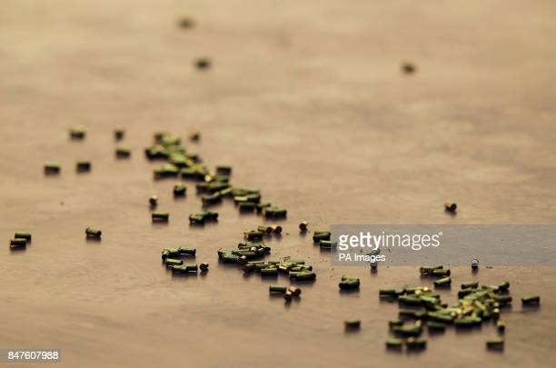 Used bullet casings litter the floor during the women's 25m pistol competition during the ISSF London World Cup at the Royal Artillery Barracks...