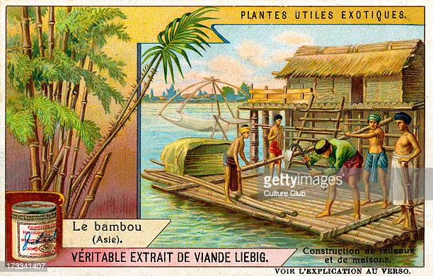 Bamboo , 1909. . Constructing rafts and houses from bamboo. Liebig Meat Extract collectible card.