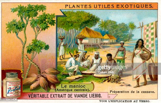 Manioc 1909 Preparing cassava Liebig Meat Extract collectible card
