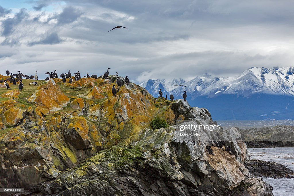 Ushuaia Tierra Del Fuego Argentina Stock Photo - Getty Images