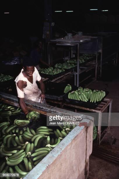 Usine de conditionnement de bannanes à Agboville en mars 1978 Côte dIvoire