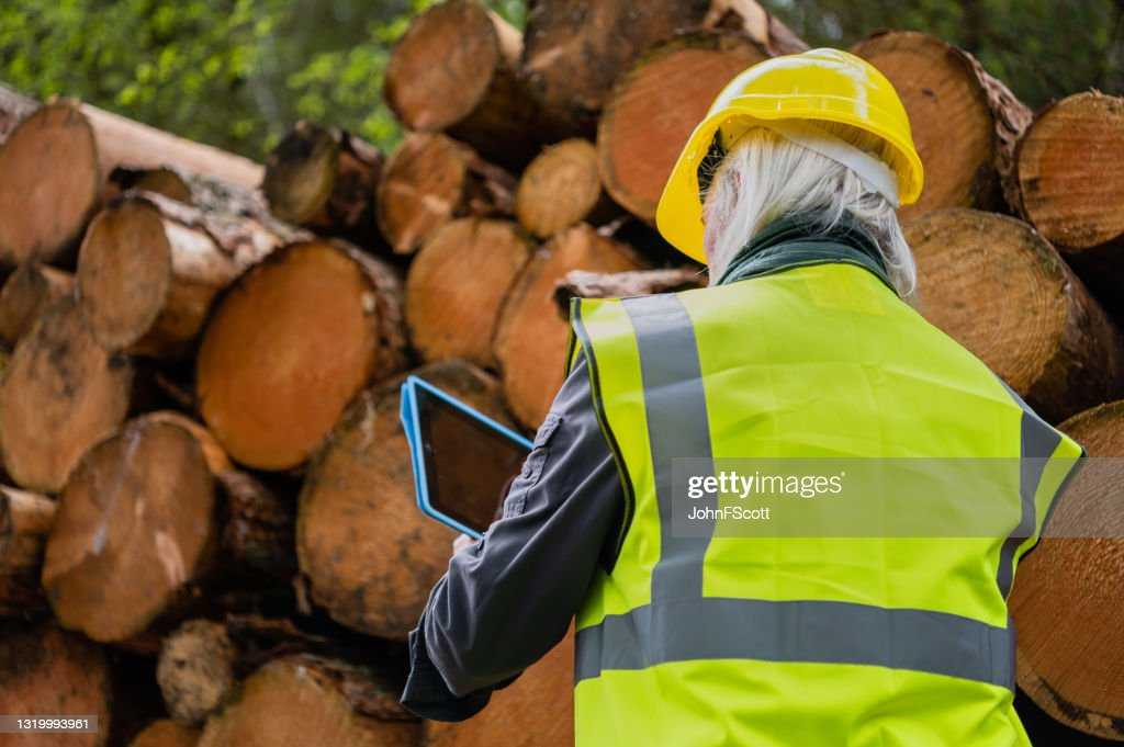 Using a digital tablet in a forest : Stock Photo