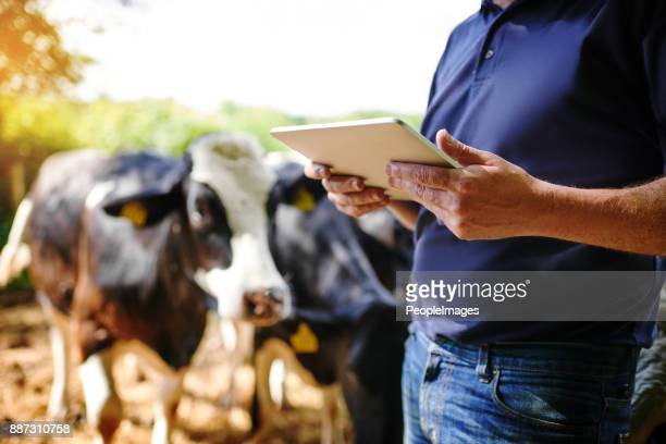 using apps designed for the agribusiness - livestock stock pictures, royalty-free photos & images