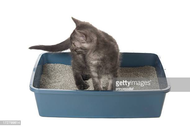 using the litterbox - litter box stock photos and pictures