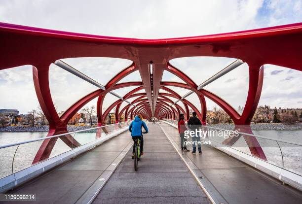 using the peace bridge in calgary - calgary stock pictures, royalty-free photos & images