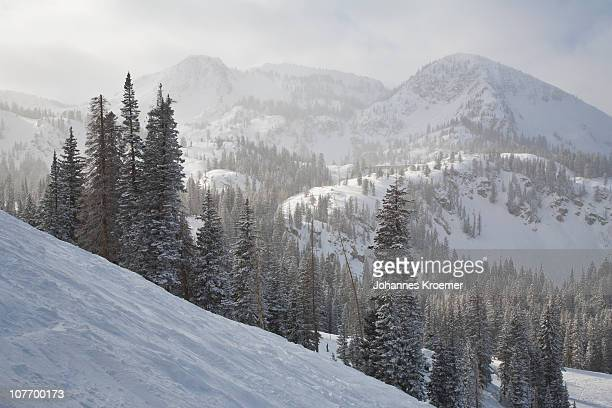 USA, Utah, Brighton, Forest in snow covered mountains