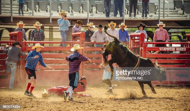 utah bull riding rodeo - bucking stock photos and pictures