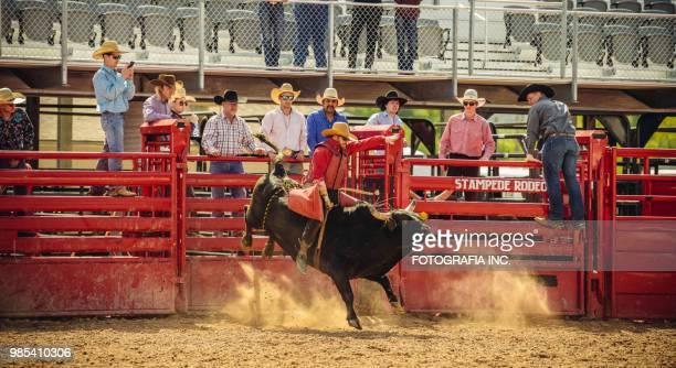 utah bull riding rodeo - bull riding stock pictures, royalty-free photos & images