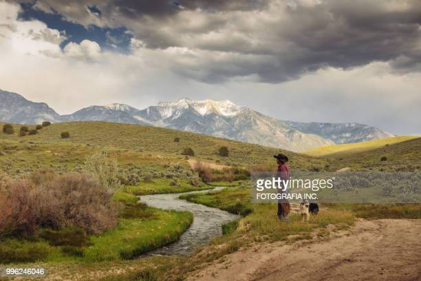utah cowboy with his dogs - prairie stock pictures, royalty-free photos & images