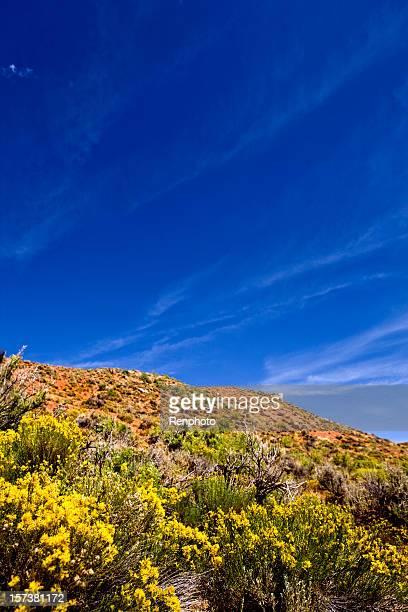 utah desert landscape - sagebrush stock pictures, royalty-free photos & images