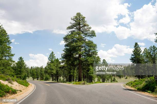 usa, utah, empty forked road in bryce canyon national park - intersection stock pictures, royalty-free photos & images