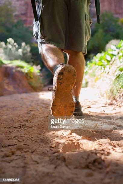 USA, Utah, Grand Gulch, Man hiking in forest