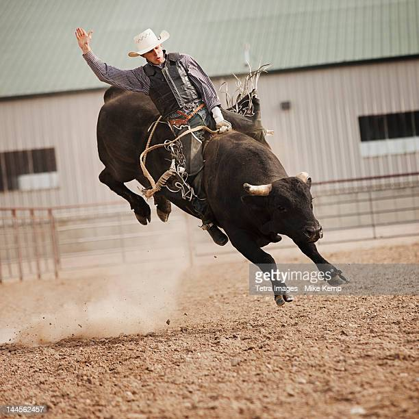 USA, Utah, Highland, Bull rider during rodeo