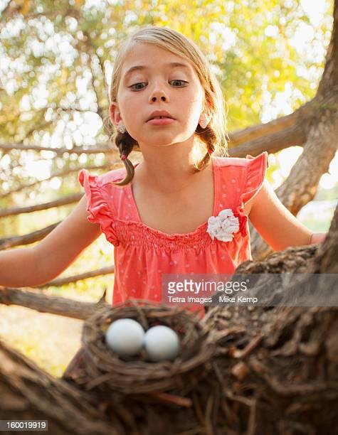 USA, Utah, Lehi, Little girl (6-7) looking at bird's nest