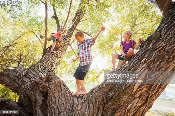 USA, Utah, Lehi, Three kids (4-5, 6-7) playing in huge tree